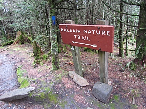 Balsam trail sign